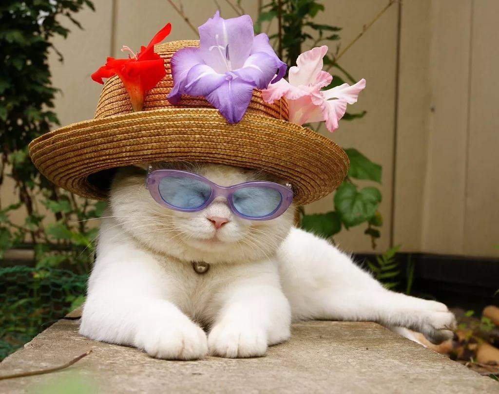 длительным непрерывным красивые фото кошек в шляпе тебя посмотрев фото
